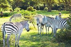 "PhotoFly Travel Club Kenya Safari 2011! • <a style=""font-size:0.8em;"" href=""http://www.flickr.com/photos/56154910@N05/5893000938/"" target=""_blank"">View on Flickr</a>"
