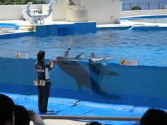 20110526 Okinawa Trip 4 (MaoPoPo & BiangBeiBei) Tags: fish japan aquarium dolphin sealife okinawa