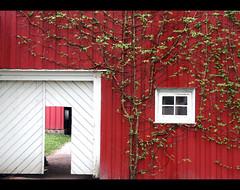 Red house (feanor83) Tags: red white house window oslo norway casa finestra porta rosso bianco norvegia pianta feanor83