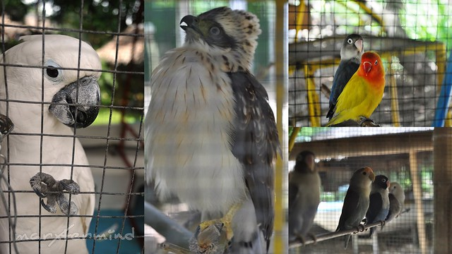 Everland Aviary Farm