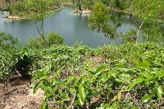 Madhabpur Lake - Bangladesh (uncorneredmarket) Tags: lake tea bangladesh teaestate teagardens aes srimongal sylhetdivision madhabpurlake