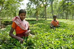 Tea Pickers Outside Srimongal - Bangladesh (uncorneredmarket) Tags: people women tea bangladesh teaplantation teaestate teagardens aes srimongal teapickers sylhetdivision sreemangal