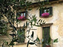 Verona (Graa Vargas) Tags: door italy flower window verona itlia graavargas 2011graavargasallrightsreserved 12002220812