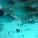 MILHARES de peixes