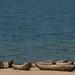 Lago Malaui e suas canoas esculpidas em troncos