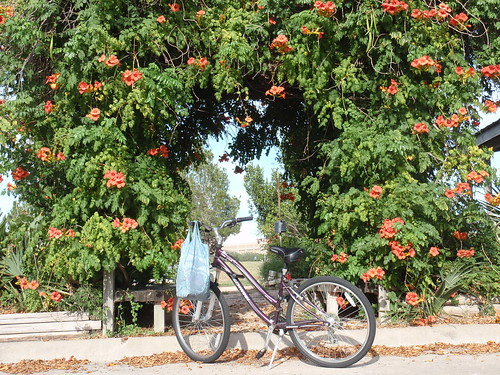 Bike with Flower Archway