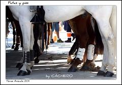 Patas y pis (marioadaja) Tags: caballo caballos patas pies toros cuadra 2011 rejones rejoneador arevalo cachero