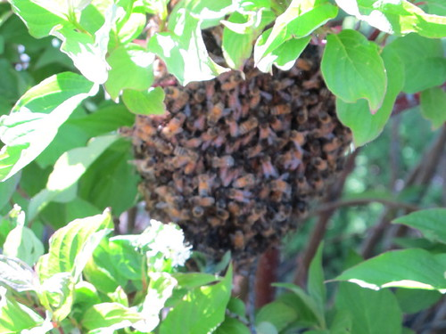 Church Bee Swarm #3
