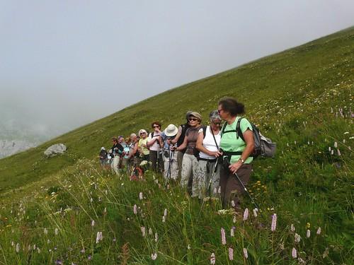 Au milieu des fleurs du Mt Cenis 007