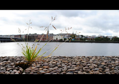 The River (Sarah Cowan's mix of photo love) Tags: city ireland flower river derry riverfoyle ourdailychallenge