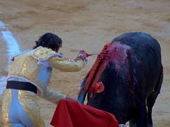 DSC_0233.NEF (miansoca) Tags: plaza espaa valencia spain bulls muerte toro toreador sangre bulfighter iberiastreets gettyimagesiberiaq3
