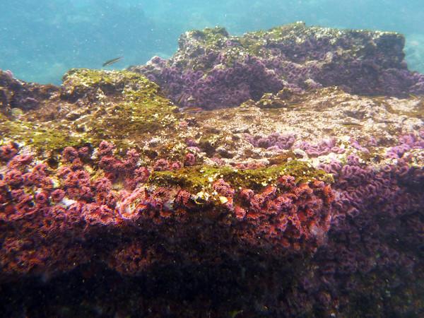RYALE_Galapagos_Underwater-28