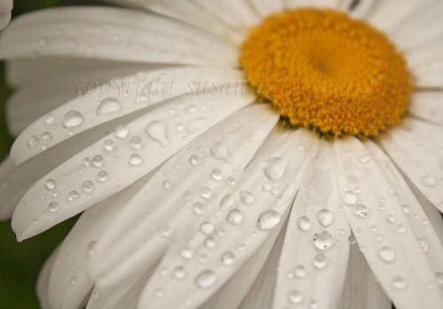 RaindropsWLR