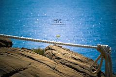 Sign of Life (StanPoliTo) Tags: life sea italy flower nature capri nikon rocks italia nikkor sorrento amalfi d5000 stanpolito