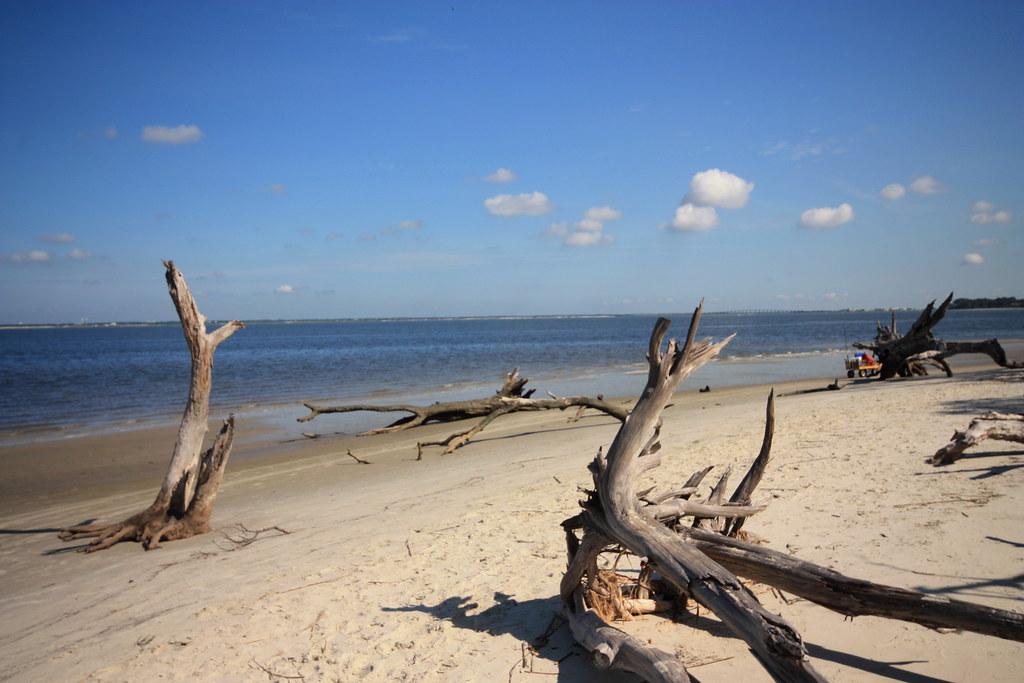 Driftwood Beach Jekyll Island3