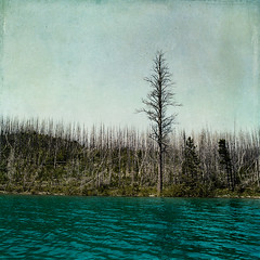 at first glance she appeared unforgiving (Sarah P) Tags: lake texture forest 24mm glaciernationalpark treetrunks flypaper lakemcdonald idream alberoefoglia nikond700 magicunicornverybest magicunicornmasterpiece sbfmasterpiece flypapertexture sarahp sbfgrandmaster springpainterly robertsfire2003 sarahputerbaugh
