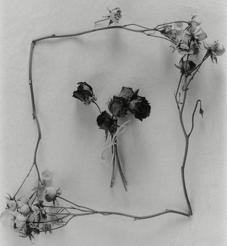 Dried rose frame, still life
