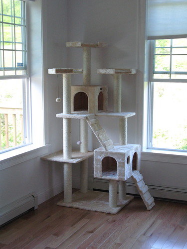 New Kitty Condo
