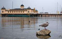 RockBird (karin2xk) Tags: sea stone sweden bokeh seagull varberg halland kallbadhus kattegatt