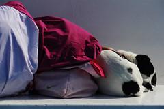Relax on the Ferry (Robyn Hooz) Tags: dog girl cane ferry canon eos nap shot sleep teen stolen sonno viaggio vacanza drowsy ragazza traghetto scatto ager rubato pennichella sonnellino 550d riposino efs18135is