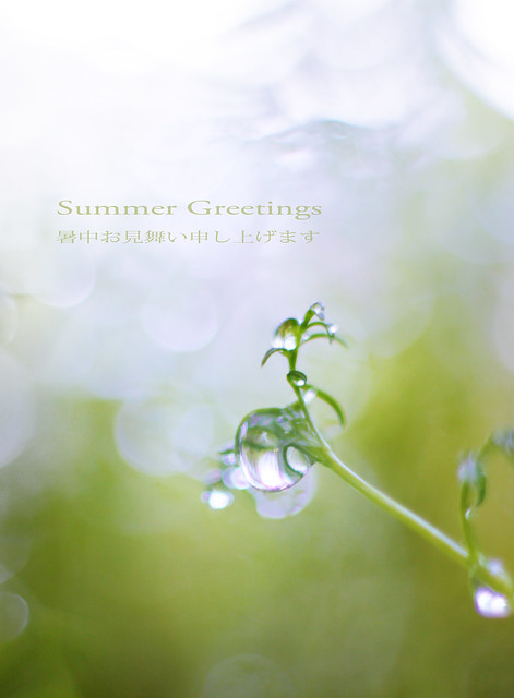 Summer greetings