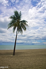 Palm - Fiji - South Pacific Ocean (Andy Bullen) Tags: ocean trip travel cruise sea tree beach water fiji sand ship andrew palm palmtree southpacific allrightsreserved queenelizabeth bullen qe southpacificocean andrewbullen