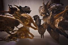Robert Wynne's Pantry (plas mawr) (JackBauer83) Tags: world rabbit bird castle heritage robert kitchen animals wales site hare conway goose edward pantry wynn wynne plas conwy mawr gwynedd castell