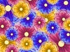 floral explosion desktop wallpaper 1024x768