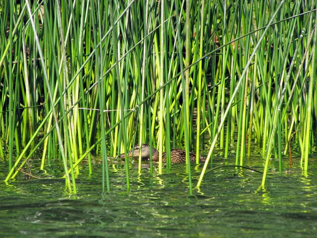 2011-08-07 Elk Lake_0031