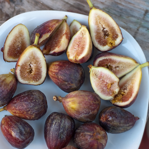 figs blog sq.jpg