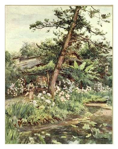017-Hortensias en un jardin de te en Kyoto-Japanese gardens 1912-Walter Tyndale