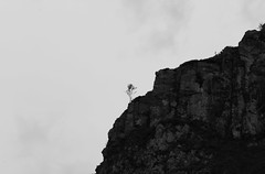 resilient (Robeevans) Tags: uk white mountain black tree nature monochrome silhouette rock wales branch north slate betwsycoed gogledd
