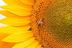 ESTATE (zagor64.) Tags: fiori colori marche sanbenedettodeltronto anawesomeshot zagor64