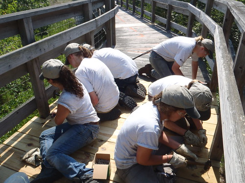 Kiptopeke crew becomes expert at replacing boards on a boardwalk