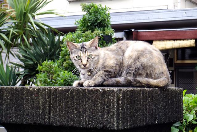 Today's Cat@2011-07-09