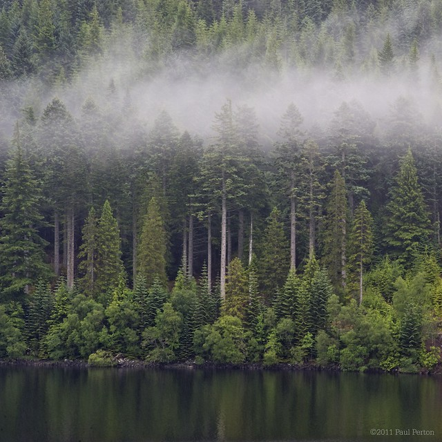 Mist and pine trees at Loch Laggan