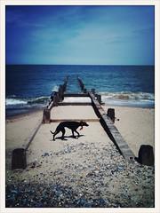 breakwater... (the tomahawk kid) Tags: sky dog beach clouds coast norfolk toodles