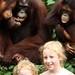 Tirando foto c/ orangotangos