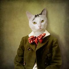 the attentive boy - Le garon attentif (Martine Roch) Tags: portrait cute cat vintage costume kitten antique surreal surrealist martineroch thecharacters flypapertextures lescaractres
