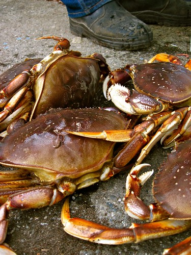 Crabs, Sechelt BC