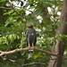Muita vida na Amazonia