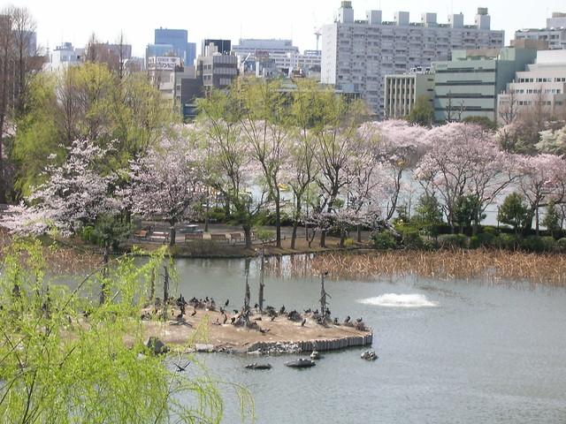 d7-03-ueno-park-zoo