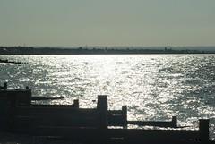 (samoac) Tags: sea beach nature water birds seaside marine whitstable broadstairs