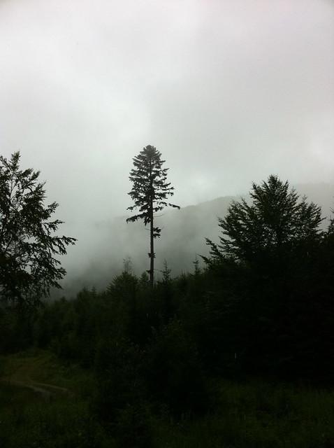 """Wanderung """"Wassertal Rundweg"""" - in den Wolken"""
