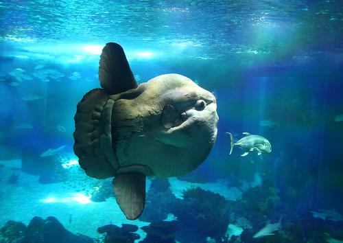 [フリー画像] 動物, 魚類, 201107281100
