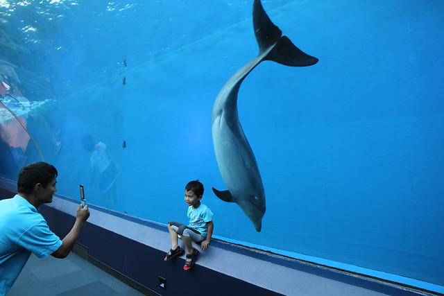 Dolphin Posing With Kid