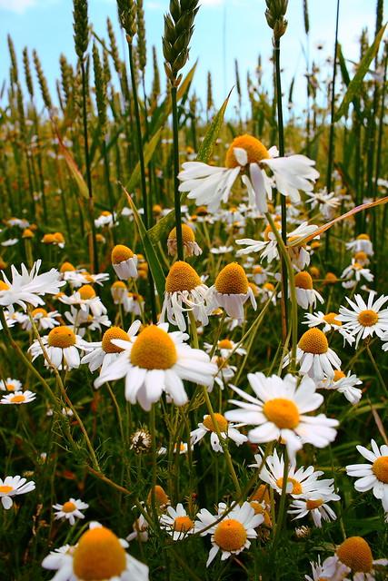 IMAGE: http://farm7.static.flickr.com/6009/5982741402_f9f71e7070_z.jpg