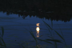 July moon_2011_07_17_0011 (FarmerJohnn) Tags: cloud moon lake reflection water night clouds canon suomi finland july calm silence midnight moonlight vesi kuu y laukaa 24105 1635 jrvi pilvi keskinen heinkuu tyyni keskiy kuutamo valkola vedenpinta hiljaisuus julymoon lakesurface canon7d heijatus anttospohja juhanianttonen