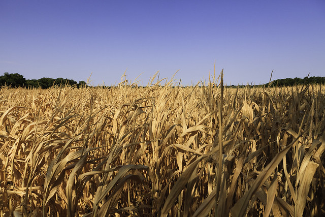 Oklahoma Drought