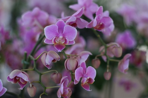 Day 212 - Orchids